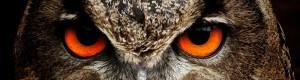 owl klein
